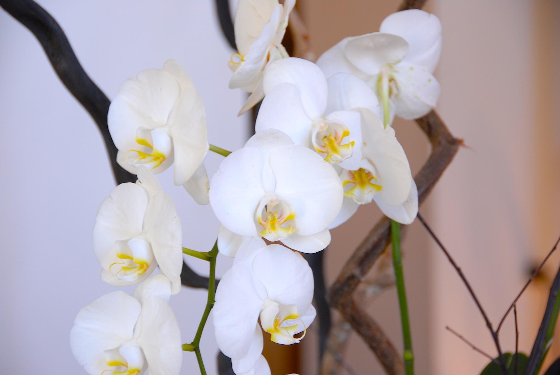 orchide.JPG